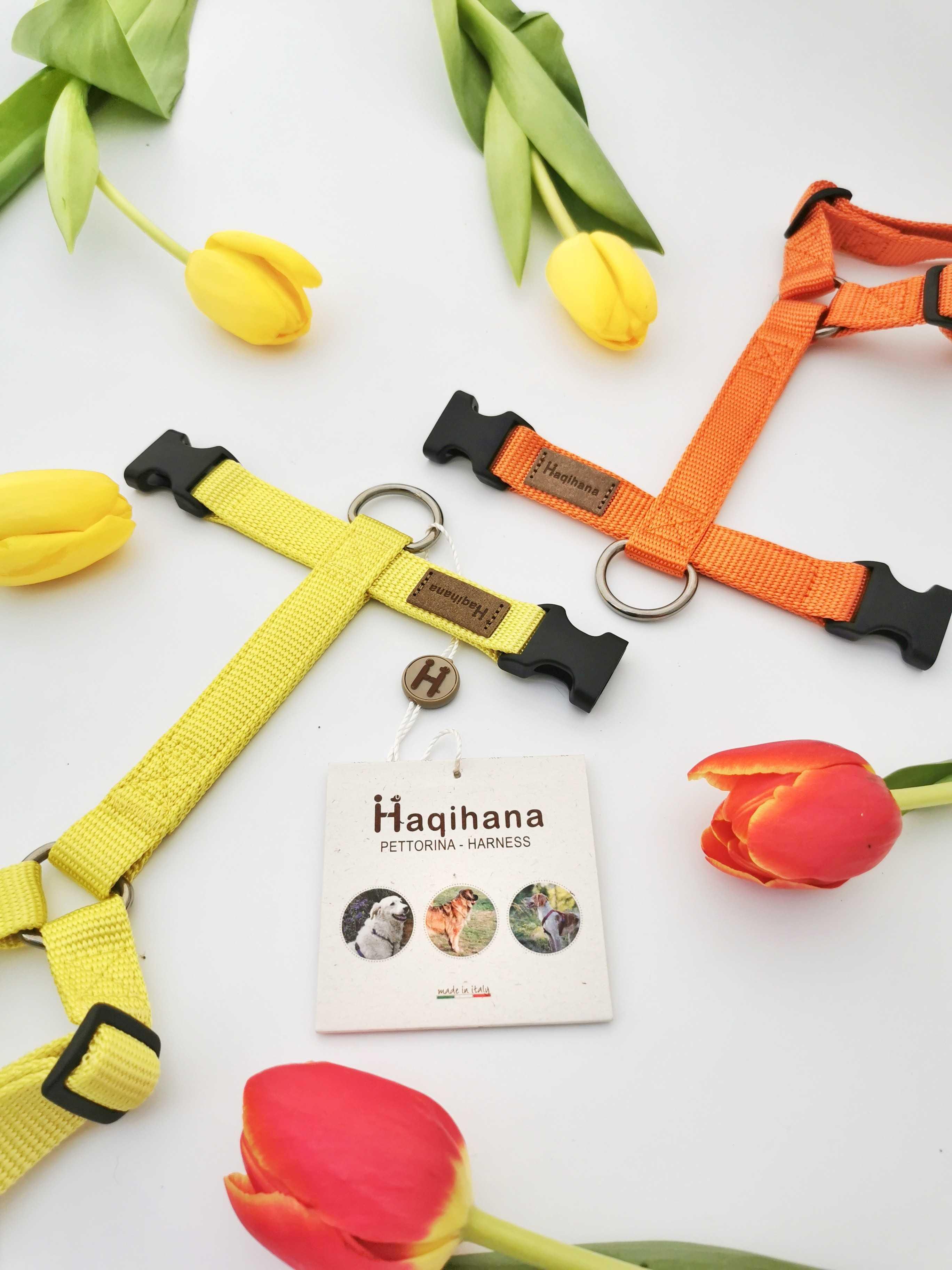 Harness Carrot