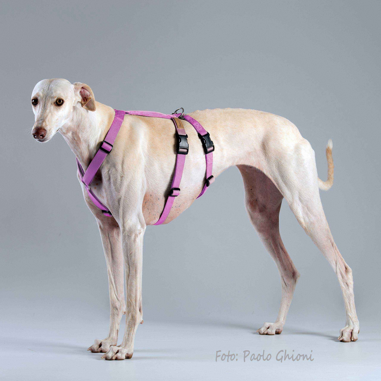 Harnesses Double H Pink