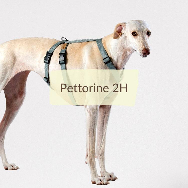 Pettorine 2H